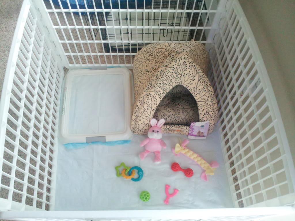 вольер для щенка, место для щенка, что подготовить к приезду щенка домой, что нужно для щенка в доме