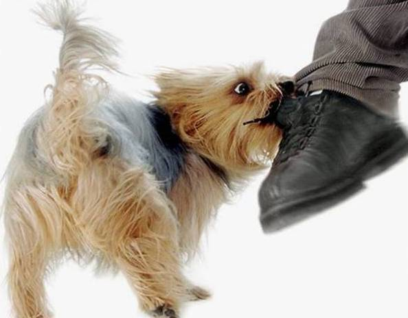 О СООТВЕТСТВИИ ХАРАКТЕРОВ СОБАКИ И ЧЕЛОВЕКА характер собаки