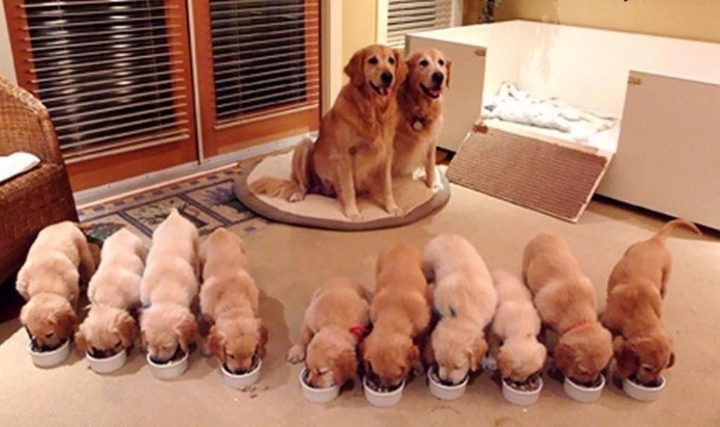 каких собак разводить