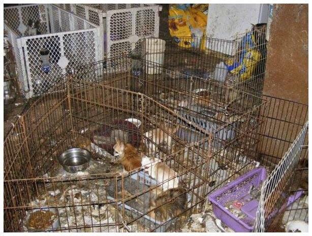 паппи мил - собачья ферма
