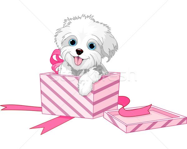 собака щенок в подарок купить скидка в день рождения