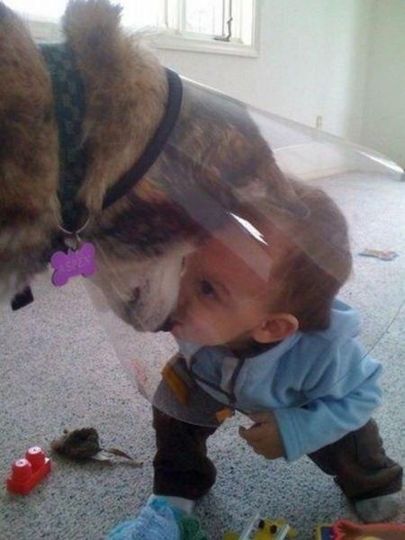ЗАЧЕМ ЧЕЛОВЕКУ НУЖНА СОБАКА. Ребенок и собака